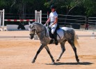 National Dressage Show - May 2015