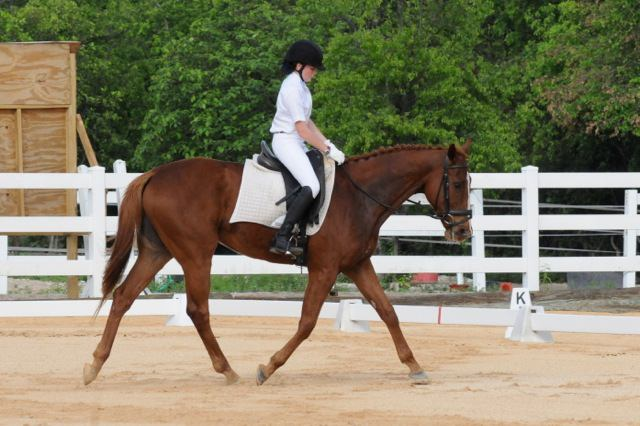 2014-06-01_CEA_Dressage_Maddy